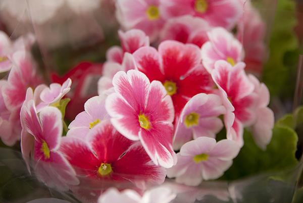 Uutuuksia kevääseen!