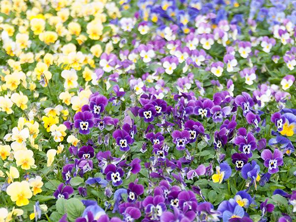 Kesä kukkii kohta