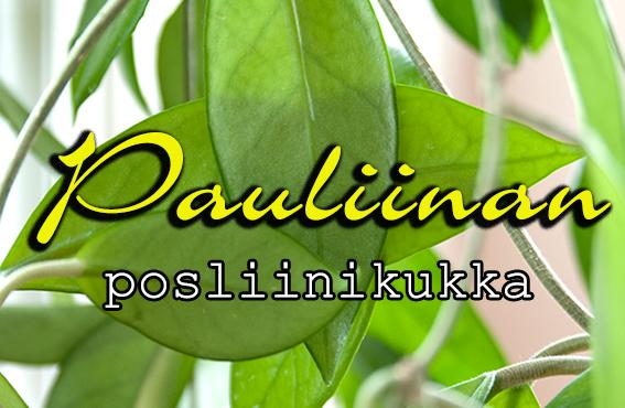 Pauliinan posliinikukka – äitien kasvattama