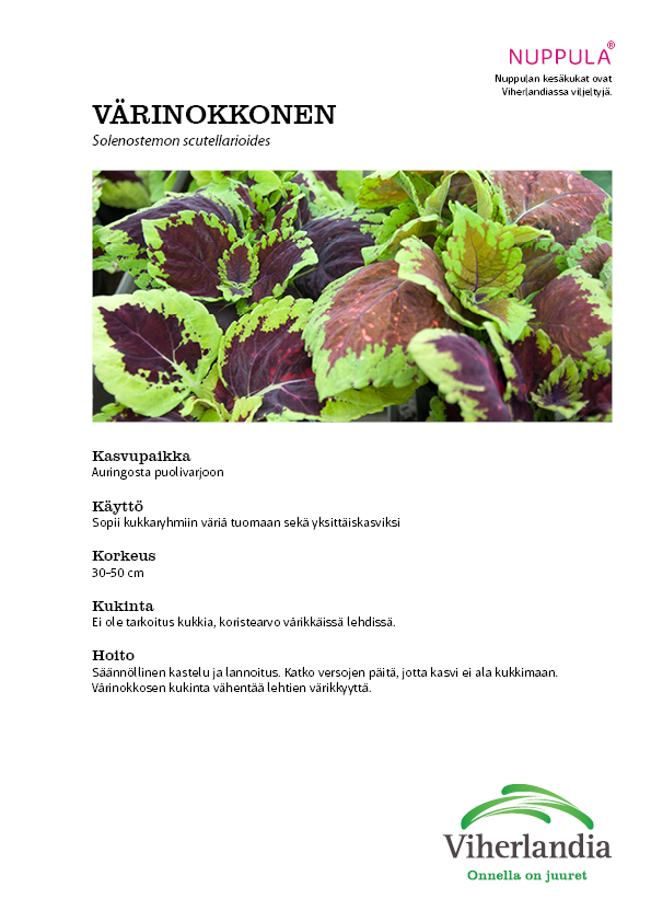 Värinokkosen hoito-ohje