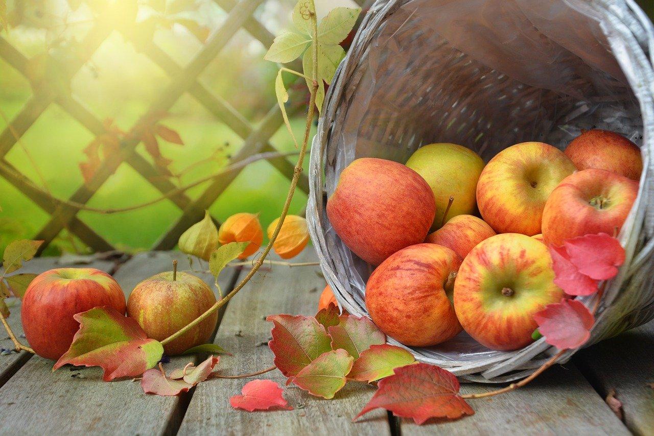 Kotimaiset omenat